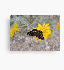 Tiny Black Butterfly Canvas Print