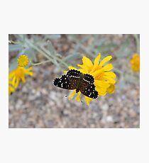 Tiny Black Butterfly Photographic Print