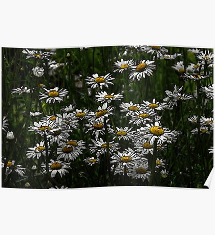 Memories Of A Daisy Field Poster