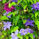 Climbing Flower and Vine by Monica M. Scanlan