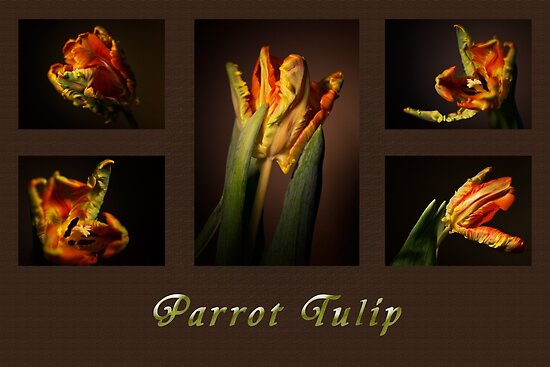 Parrot Tulip Collage by Kasia-D