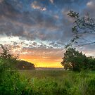 Sun over Sherwood by Daniel Wills