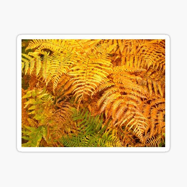 Autumn ferns Sticker