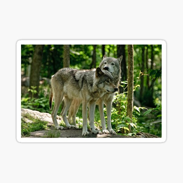 Whisper Sweet Nothing - Timberwolves  Sticker