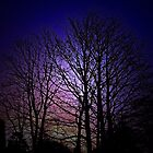The Winter Trees Of Sunrise Sky by TheStand