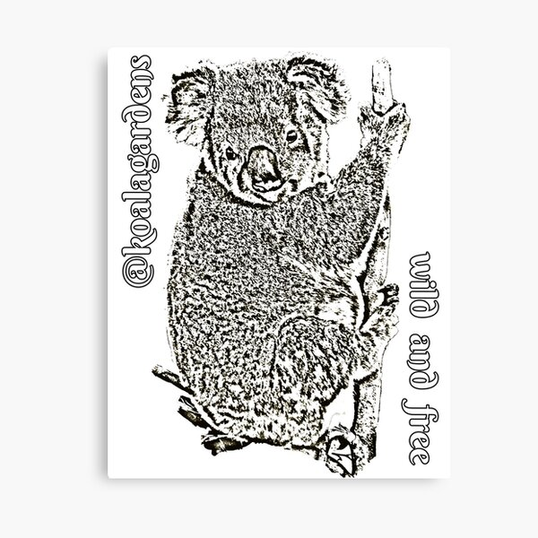 Clinger - wild koalas must have a future Canvas Print