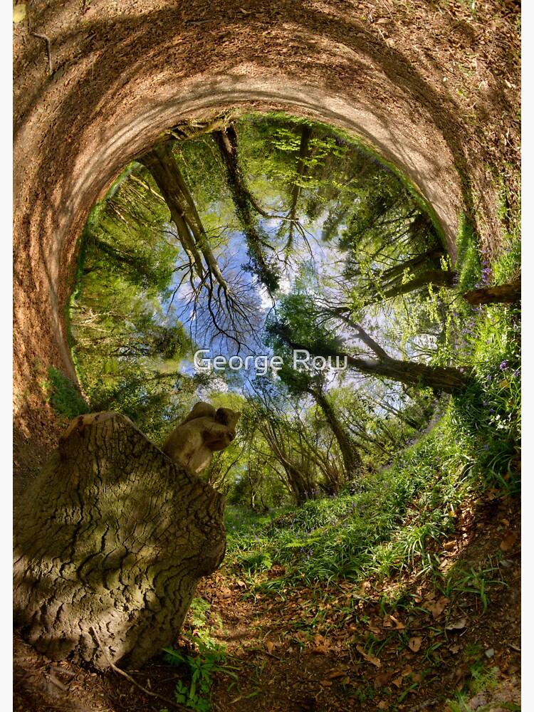Squirrel Sculpture in Prehen Woods, Derry - Sky In by VeryIreland
