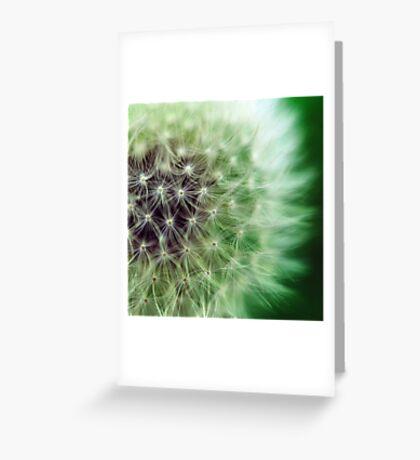 Soffione ... Greeting Card