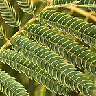 Ferns Scales by Joy Watson