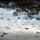 Marsh Reflections by Glenn Rickborn Jr.