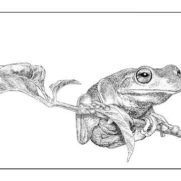 Green tree frog by LauraGrogan