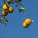 Wild Lemons by PhoenixArt