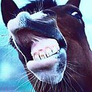 Funny Horse  by Nick Lewis