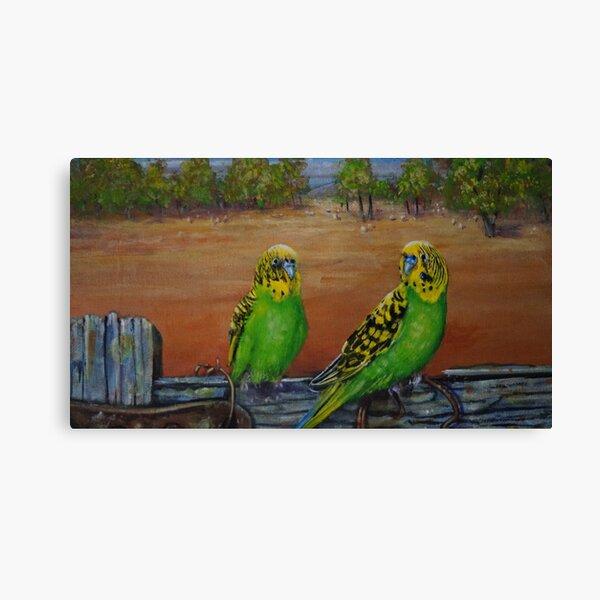 YELLOW PARAKEET Glossy 8x10 Photo Parrot Print Australia Poster Bird Wildlife