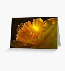 ~ Daffodil ~ Greeting Card