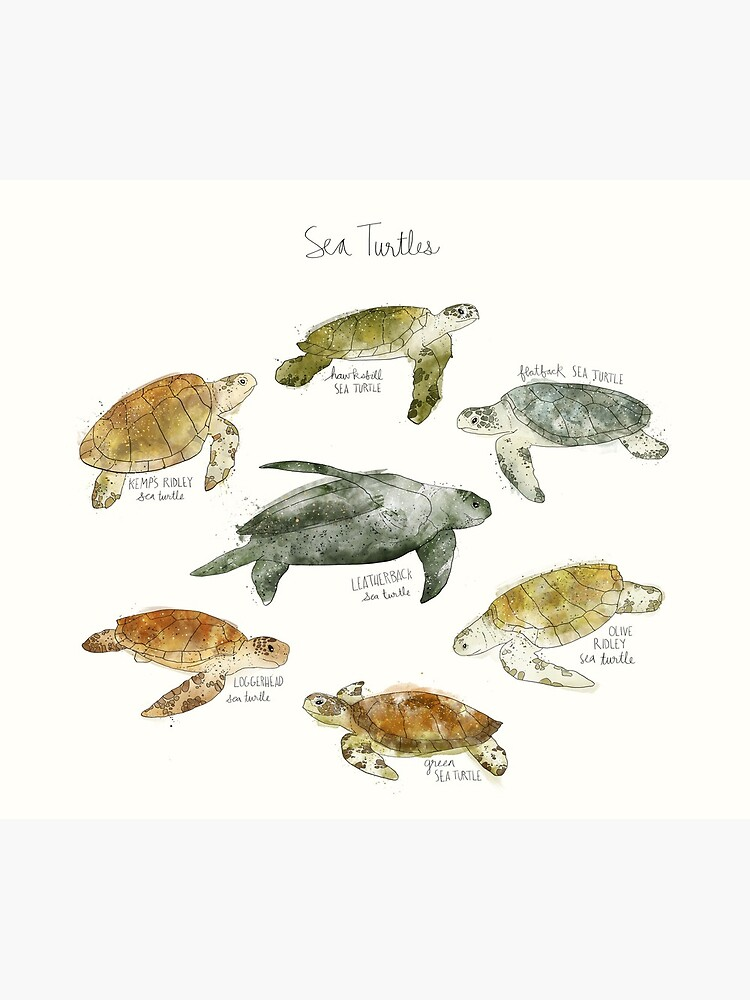 Sea Turtles by AmyHamilton
