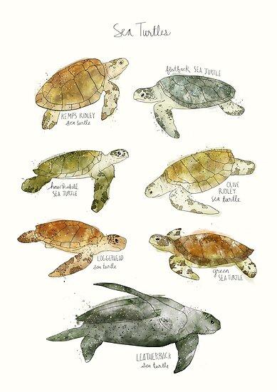 Sea Turtles by Amy Hamilton