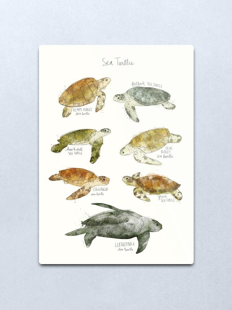 Alternate view of Sea Turtles Metal Print