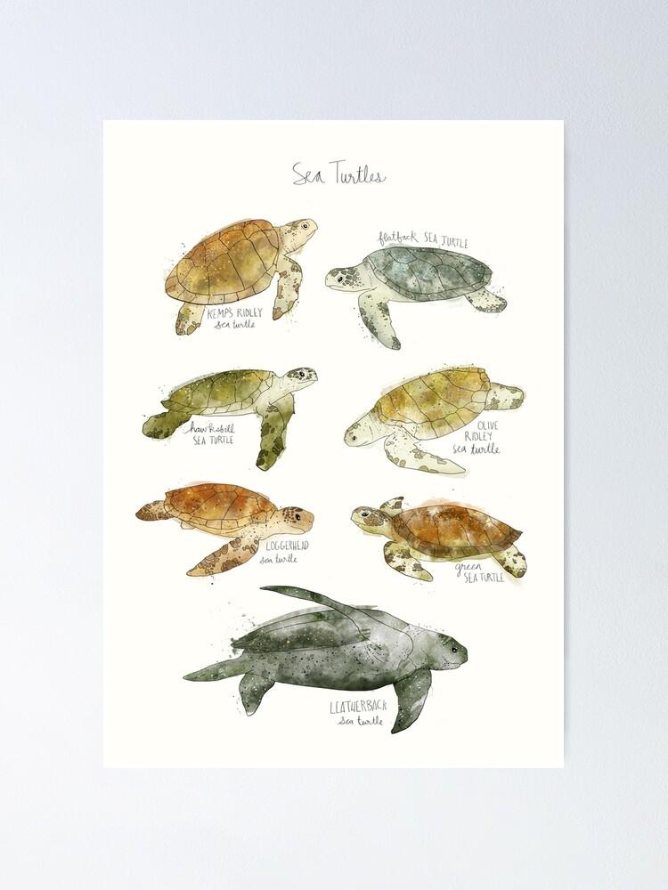 Alternate view of Sea Turtles Poster