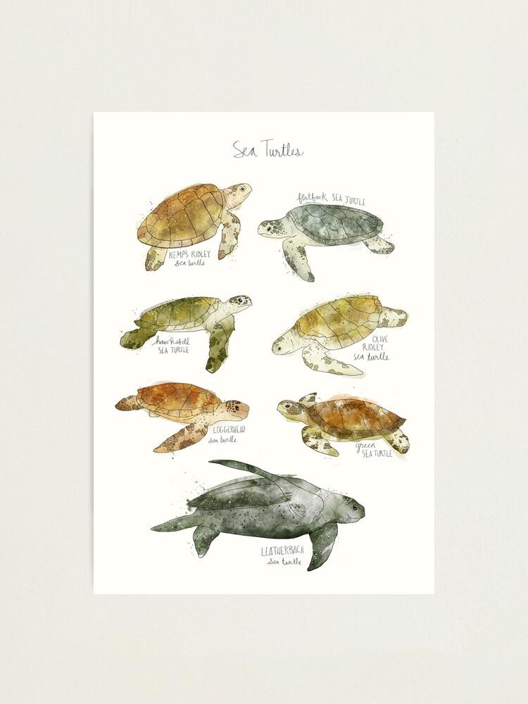 Alternate view of Sea Turtles Photographic Print
