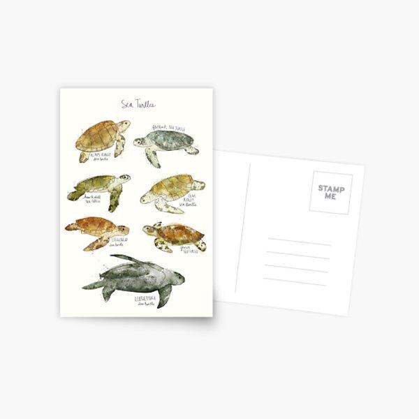Sea Turtles Postcard