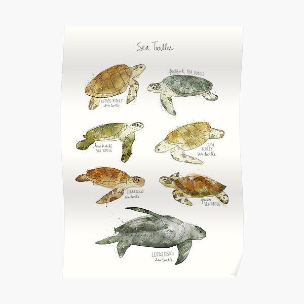 Sea Turtles Poster