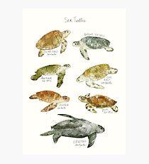Meeresschildkröten Fotodruck