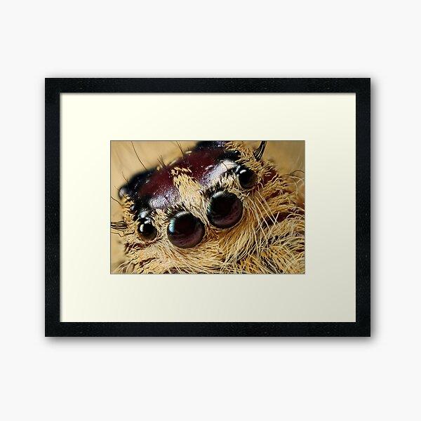 jumping spider 5X Framed Art Print