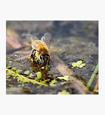 Replenishing at the Water Hole Photographic Print