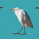 Grumpy Bird by newmindflow