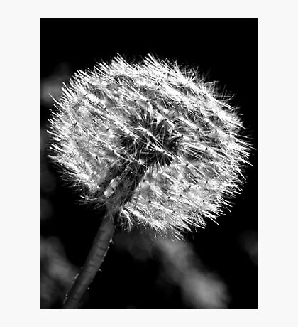 Dandy Days In Black And White. Photographic Print