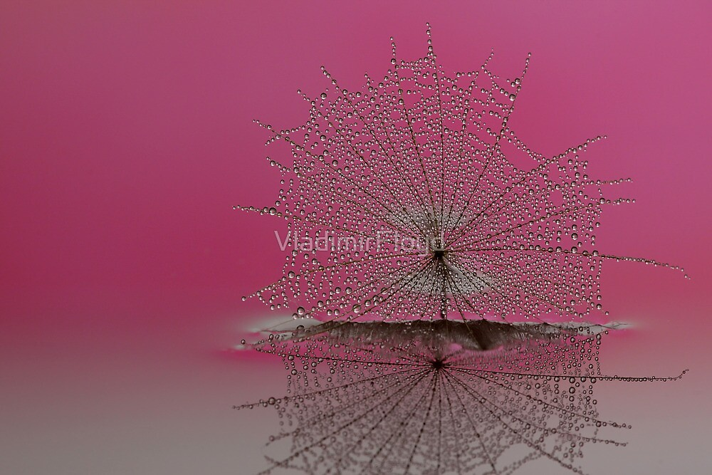 Wet Dandy 2 by VladimirFloyd