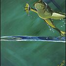 Frog Fly by Kim Donald