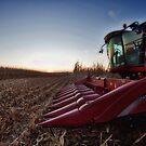 Fall Harvest by Steve Baird