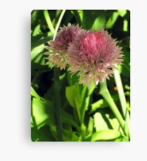 Wild Chives Canvas Print