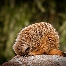 'I'm an echidna' by Lisa Kenny