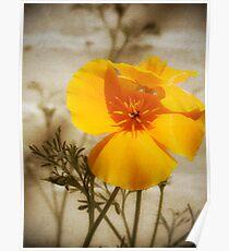 Poppy on Sepia Poster
