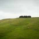 On the ridge by Mel Brackstone