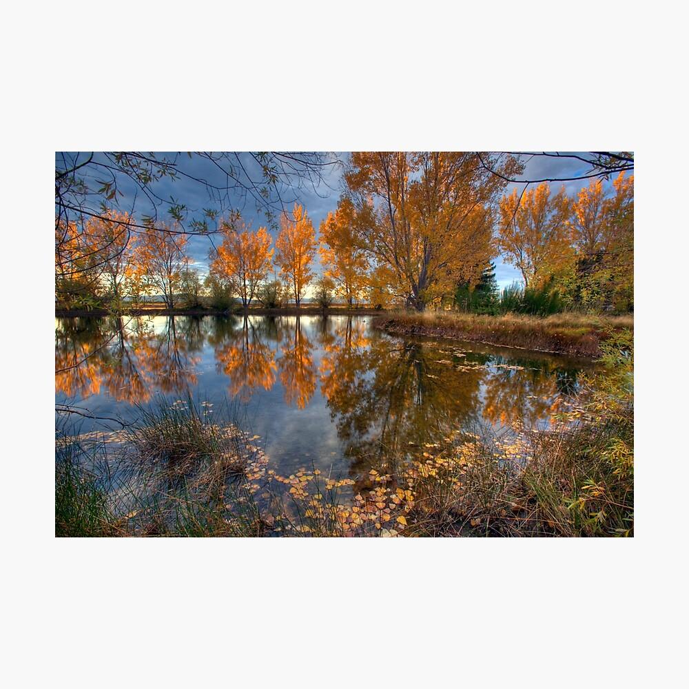 Autumn in Otago County Photographic Print