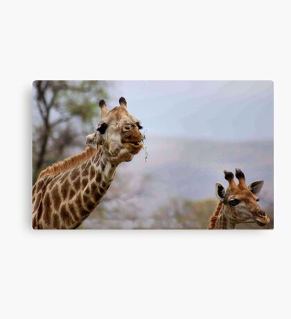 SHAPY AND PATTY- YEAH, Thats us for shapes and patterns! Canvas Print