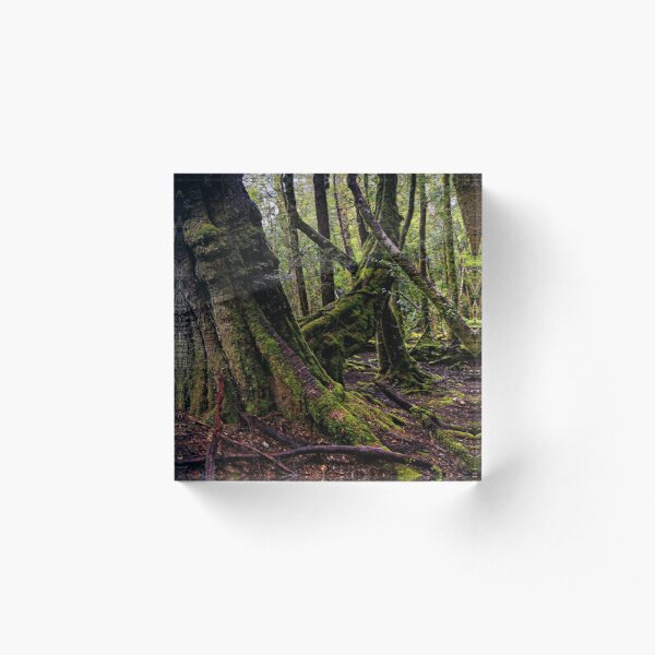 The clearest way to the Universe is through a forest wilderness Acrylic Block