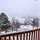 Spring in Utah by Barbara Manis
