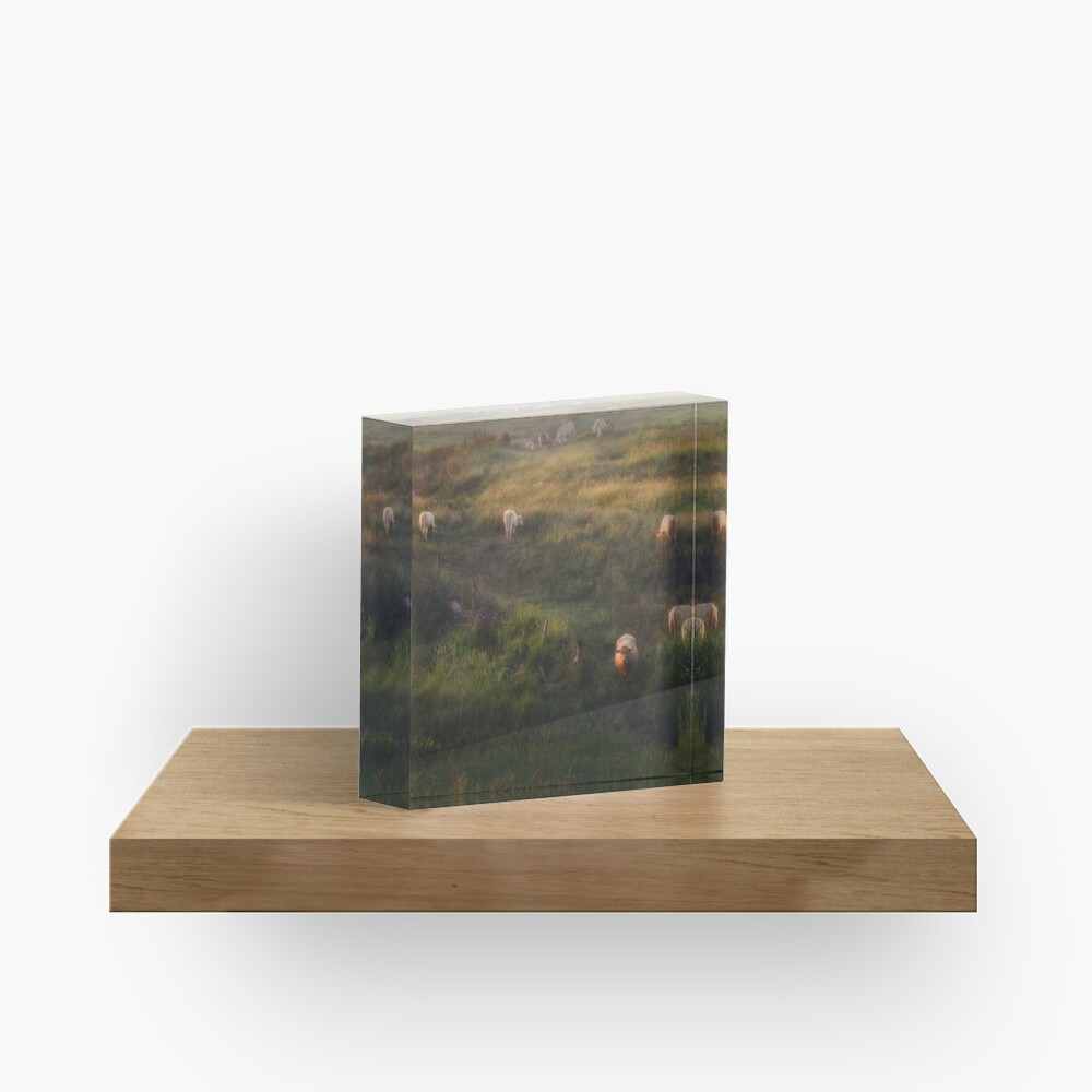 The cows Acrylic Block