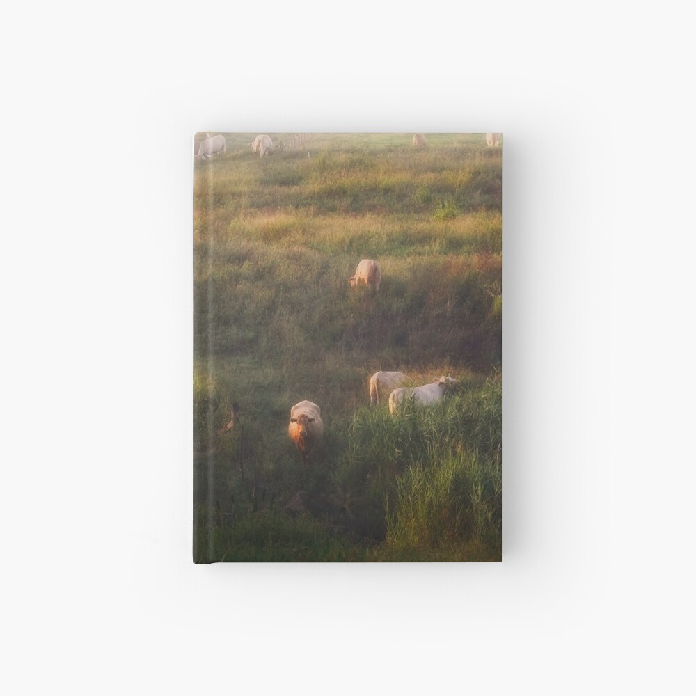 The cows Hardcover Journal