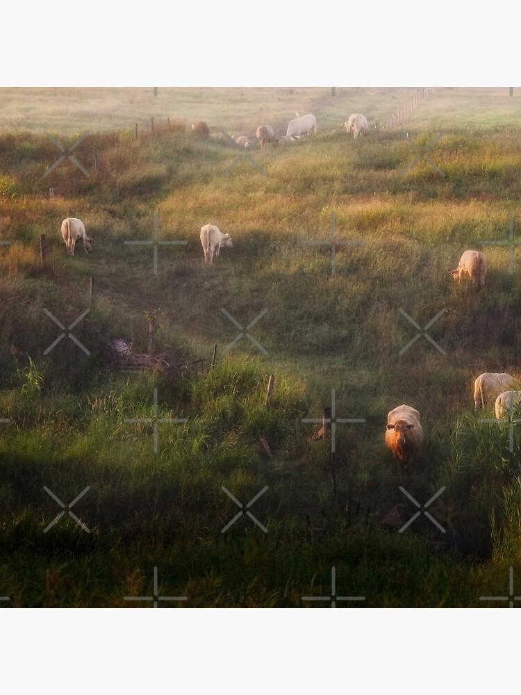 The cows by MelBrackstone