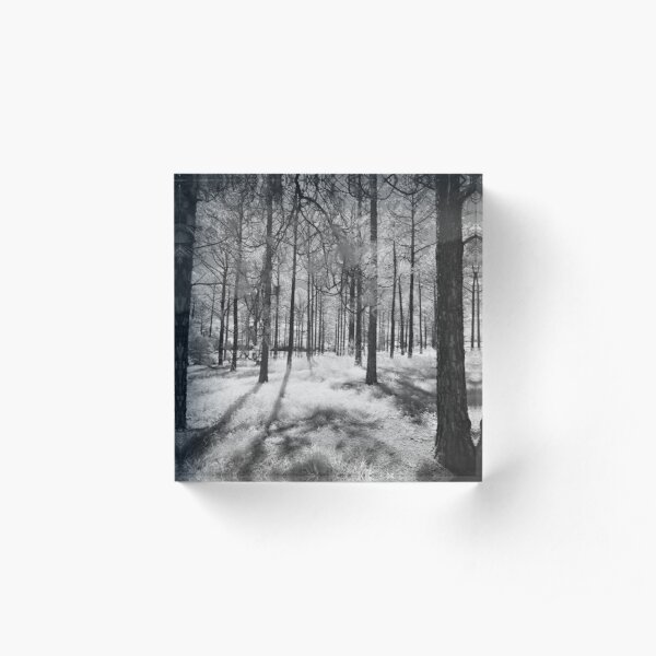 Pine Forest Acrylic Block