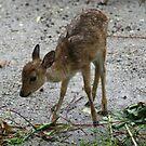 Bambi by Sangeeta