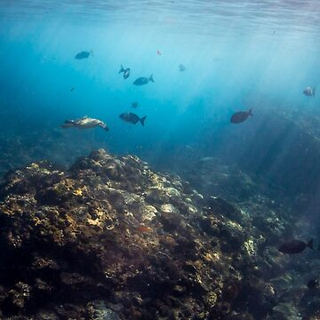 Flinders Reef, Moreton Bay by KaraMurphy