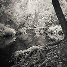 Far North Qld in infrared by Mel Brackstone