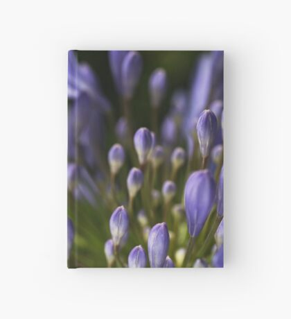 Agapanthus Dreaming Hardcover Journal